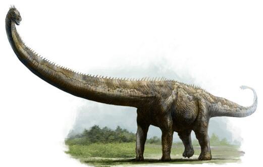世界上最大的动物,蓝鲸以33米居榜首(最大动物盘点)