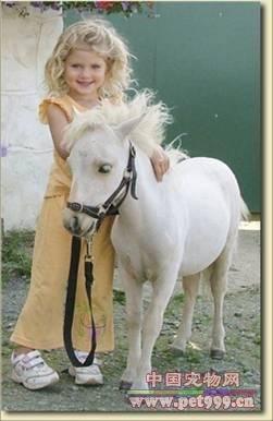 世界上最小的马种 法拉贝拉马