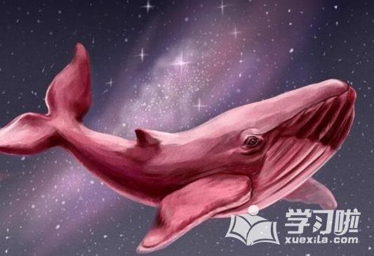 粉鲸游戏好玩吗_粉鲸游戏50个任务是什么_粉鲸游戏怎么玩下载