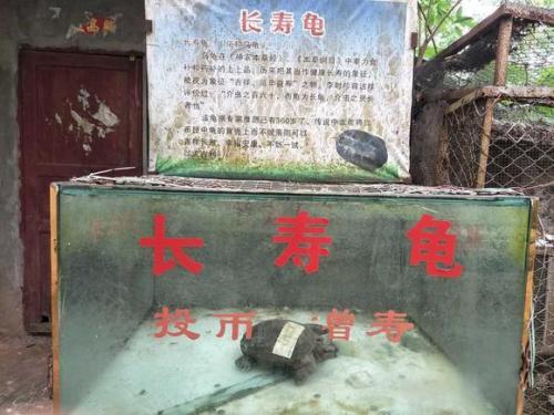 海口动物园成炼狱