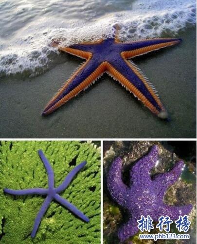 世界上十种奇特紫色动物,美的让人惊讶(图)