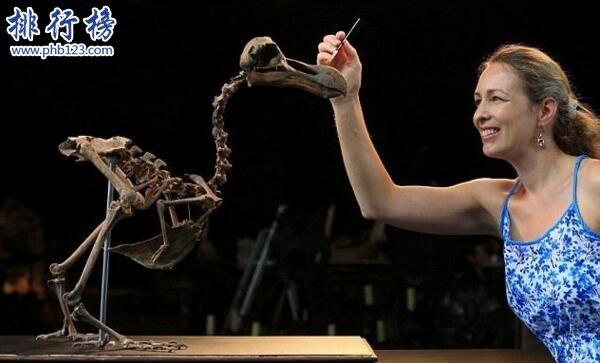 最著名的已灭绝动物:渡渡鸟,从被发现到灭绝仅用70年