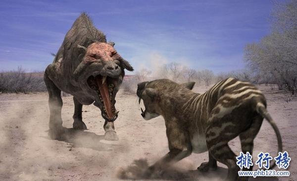 上古时期最凶猛的动物:巨猪,利齿可咬碎猎物骨头(体型和野牛一样大)