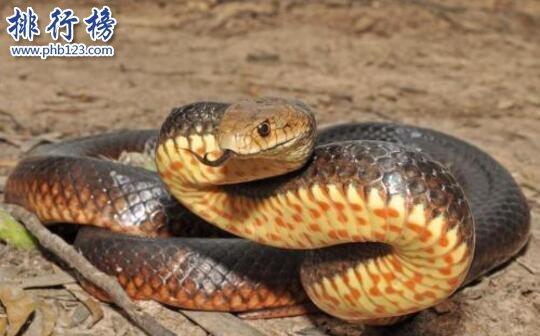 世界上最恐怖的蛇,非洲腾蛇(至今无解毒血清可用)