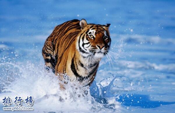 中国十大濒危动物排行榜 中国即将灭绝的动物