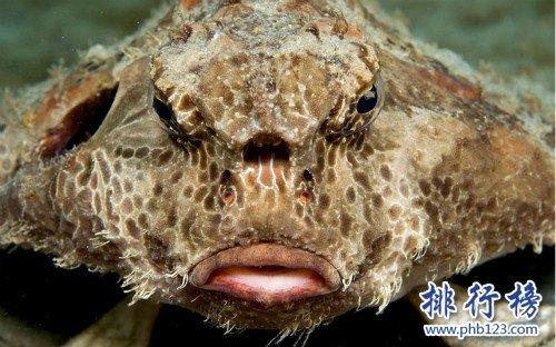 世界上最丑的鱼排行榜,水滴鱼位列第一(没有最丑只有更丑)