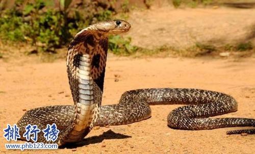 世界上十大最危险动物 第一名可能就在你身边