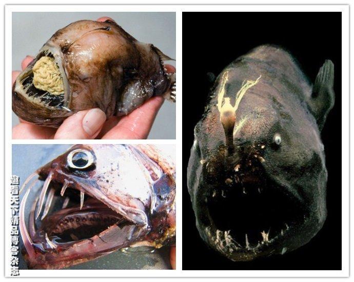 盘点地球上10种最令人恶心恐惧的怪鱼(图)