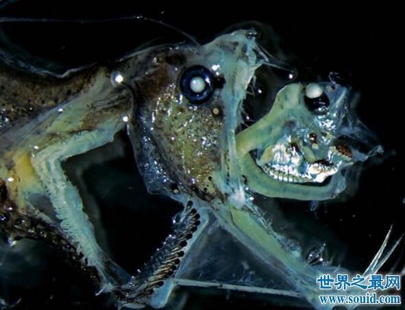 十大恐怖的深海生物,吞噬鳗是温柔的怪物