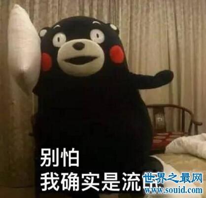 熊本熊表情包,贱萌型日本吉祥物火爆世界