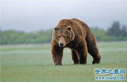 什么动物会冬眠?盘点世界上10种冬眠的动物